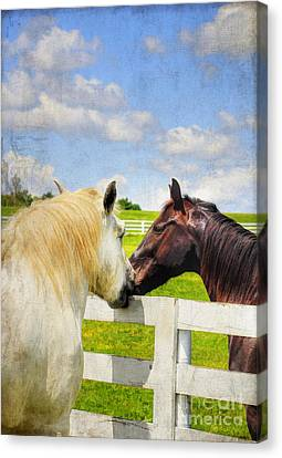 Kentucky Horse Park Canvas Print - Barn Yard Kisses by Darren Fisher