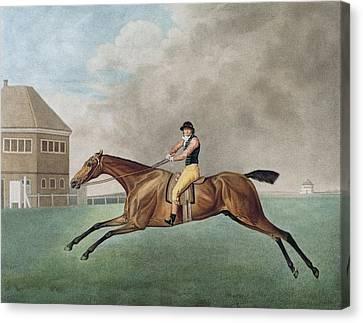 Baronet Canvas Print