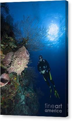 Barrel Sponge And Diver, Belize Canvas Print by Todd Winner