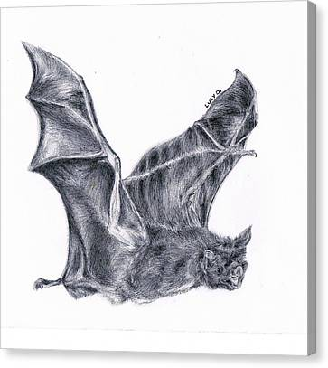 Bat Canvas Print by Lucy D