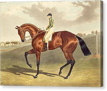 Bay Horse Canvas Print - Bay Middleton Winner Of The Derby In 1836 by John Frederick Herring Snr