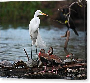 Canvas Print featuring the photograph Bayou Friends by Luana K Perez