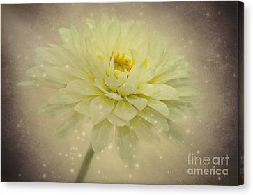 Be A Star Canvas Print by Angela Doelling AD DESIGN Photo and PhotoArt
