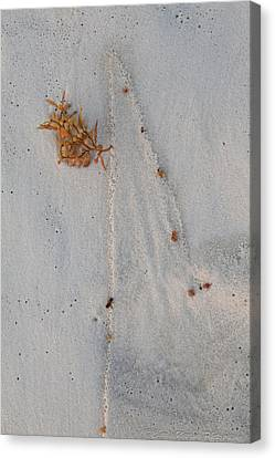 Canvas Print featuring the photograph Beach Art I by Charles Warren