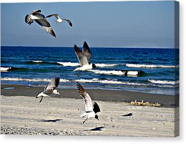 Beach Birds In Play Canvas Print by Nicole Hutchison