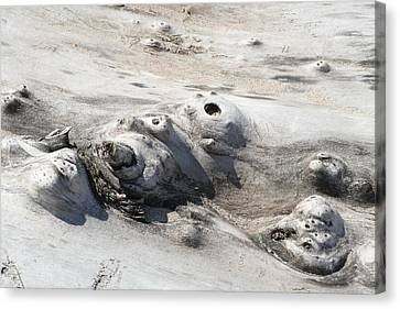 Canvas Print featuring the photograph Beach Driftwood II by Peg Toliver