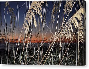 Beach Grass Canvas Print by Susan McNamara