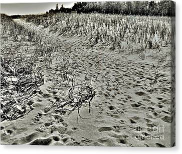 Canvas Print featuring the photograph Beach Path by Lin Haring