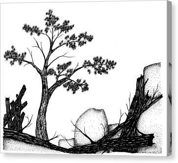 Beach Pine Canvas Print by Jason Carroll