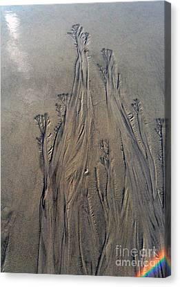 Canvas Print featuring the photograph Beach Sand Flowers With Rainbow by Doris Blessington