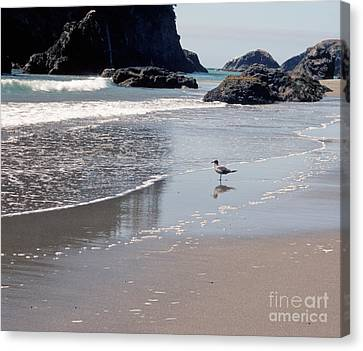 Beachcomber Canvas Print by Sharon Elliott