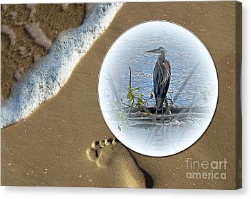 Beached Heron Canvas Print by Sue Stefanowicz
