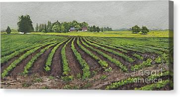 Bean Traced Canvas Print
