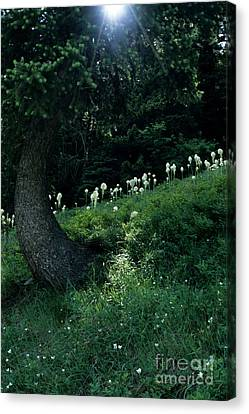 Bear-grass Ridge II Canvas Print by Sharon Elliott