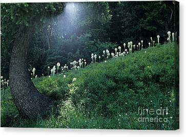Bear-grass Ridge Canvas Print by Sharon Elliott