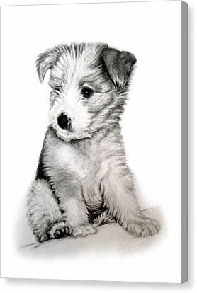 Bearded Collie Pup Canvas Print by Michelle Harrington