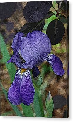 Canvas Print featuring the photograph Bearded Iris by Michael Friedman