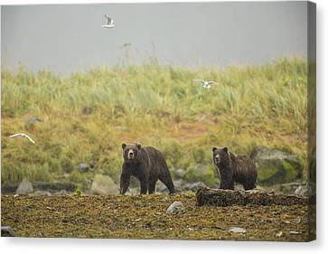 Prints Of Alaska Canvas Print - Bears In The Rain by Tim Grams