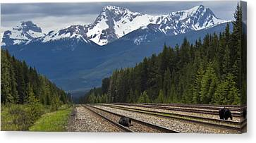 Bears On A Track Canvas Print