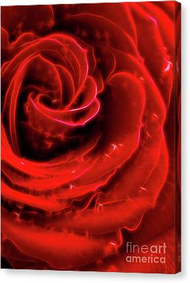 Beautiful Abstract Red Rose Canvas Print by Oleksiy Maksymenko
