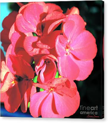 Beautiful Begonia Canvas Print by Lorraine Louwerse
