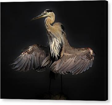 Beautiful Blue Heron Wings Canvas Print by Paulette Thomas