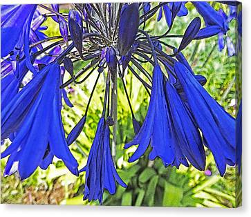 Beautiful Bluebells Close-up Canvas Print by Anne Mott