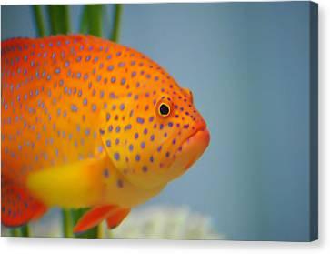 Beautiful Fish Canvas Print
