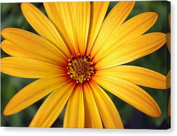 Beautiful Flower Canvas Print