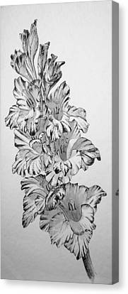 Canvas Print featuring the painting Beautiful Gladiolas by Eleonora Perlic