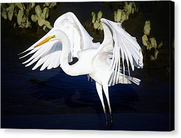 Beautiful Great White Egret Canvas Print by Paulette Thomas