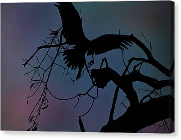Beautiful Landing Canvas Print by Kim Henderson