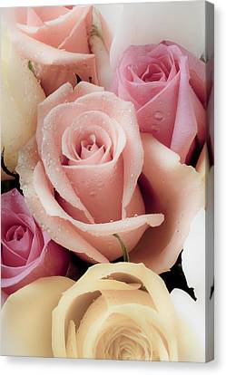 Close Up Floral Canvas Print - Beautiful Roses by Garry Gay