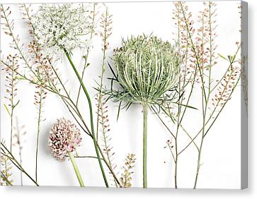 Beautiful Weeds Canvas Print by HD Connelly