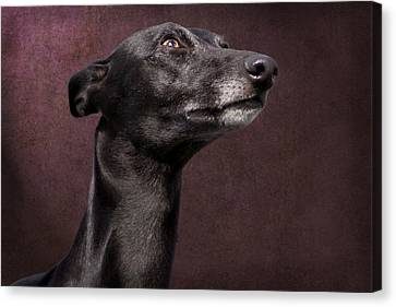 Canvas Print featuring the photograph Beautiful Whippet Dog by Ethiriel  Photography