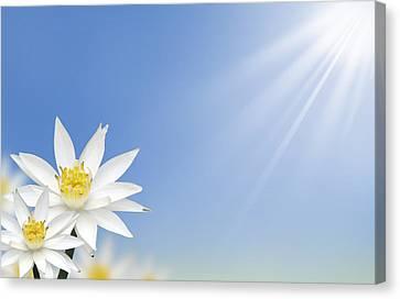 Beautiful White Lotus Flower  Canvas Print by Natthawut Punyosaeng