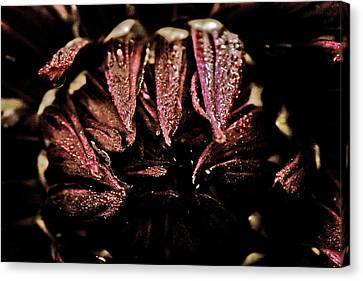 Beauty In Dark Canvas Print by Terrie Taylor