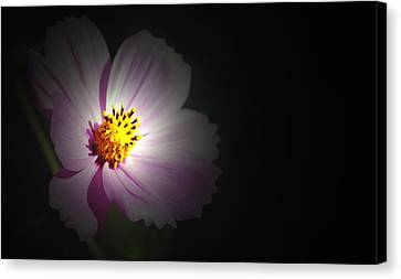 Canvas Print featuring the photograph Beauty In Darkness by Amee Cave