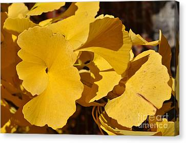 Beauty In The Leaves Canvas Print by Denise Ellis