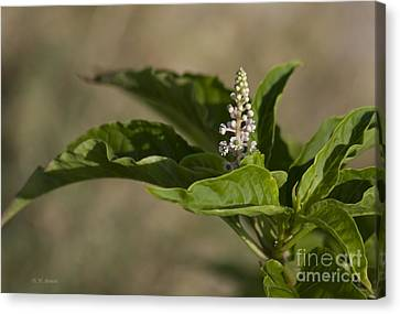 Beauty Of A Wildflower Canvas Print by Deborah Benoit