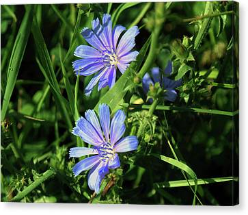 Beauty Of The Field Canvas Print