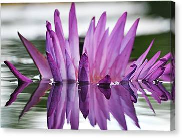 Waterlily Canvas Print - Beauty Within by Melanie Moraga