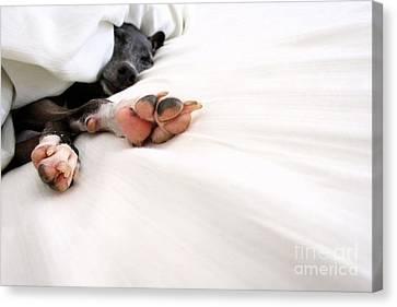 Bed Feels So Good Canvas Print