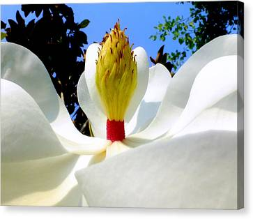 Bed Of Magnolia Canvas Print by Karen Wiles