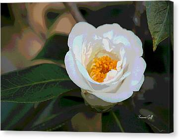 Bedazzling White Camellia Canvas Print by Suzanne Gaff
