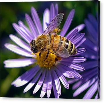 Canvas Print featuring the photograph Bee by Anna Rumiantseva
