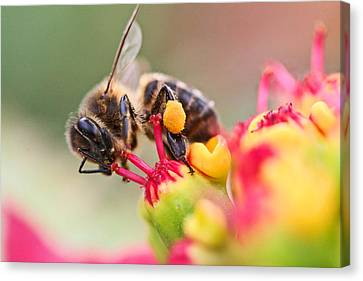 Bee At Work Canvas Print by Ralf Kaiser