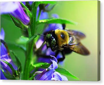 Bee Delight Canvas Print