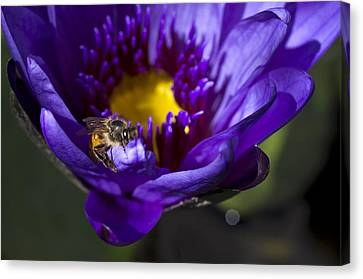 Canvas Print featuring the photograph Bee Hug by Priya Ghose