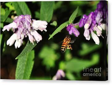 Bee In Flight Canvas Print by Kaye Menner